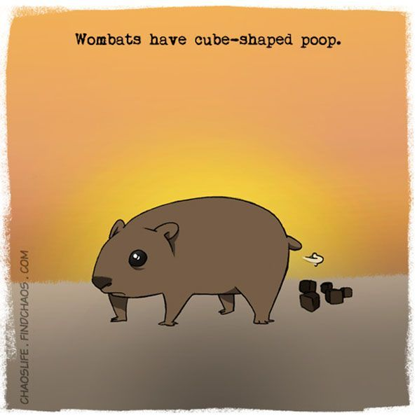 More Wombats:
