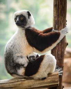 (image credit: Ray Meibaum / Saint Louis Zoo)