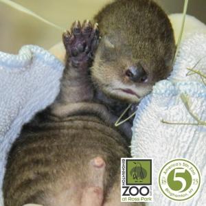 (photo credit:Binghamton Zoo)