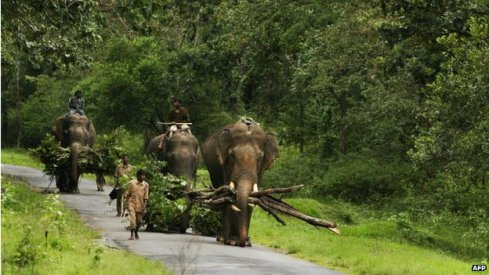 (Nagarhole National Park now fall in the fold of the protected forest in Karnataka. Image Credit: BBC)