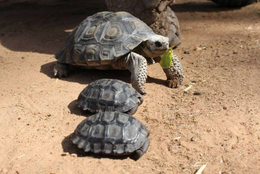 R.J. and little siblings. Photo credit: Taronga Western Plains Zoo)