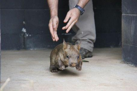 (Photo Credit: Taronga Zoo)