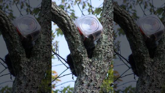 (Image Credit: AP Photo/NJ Department of Environmental Protection)