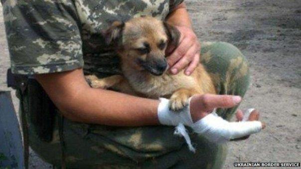 (Zhuzha, taking care of one of her care-takers. Image Credit: Ukrainian Border Service/BBC)