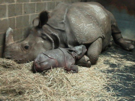 (Image Credit: Kelly Brown of the Buffalo Zoo)