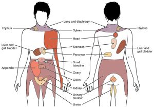 Referred Pain Map