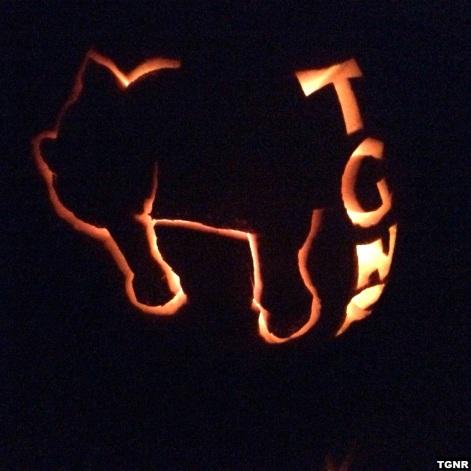 tgnr-pumpkin-tgnr-image